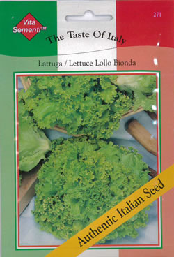 Image of Italian Lattuga Lollo Bionda Lettuce Seeds