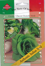 Small Image of Italian Cicoria Grumolo Verde Chicory Seeds
