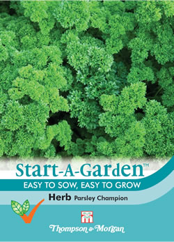 Image of Start A Garden Herb Parsley Champion