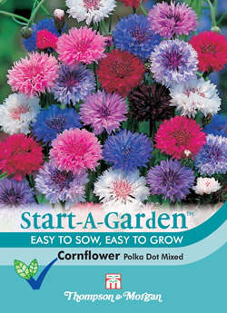 Image of Start a Garden Cornflower Polka Dot Mixed