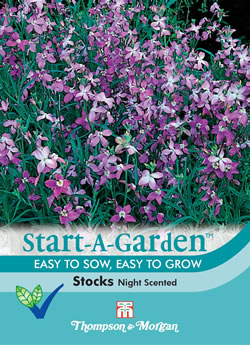 Image of Start a Garden Stocks Night Scented
