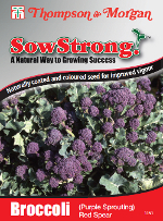 Sow Strong Red Spear (Purple Sprouting) Broccoli Seeds