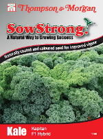 Small Image of Sow Strong Kapitan F1 Hybrid Kale Seeds