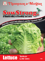 Sow Strong Tamburo Lettuce Seeds