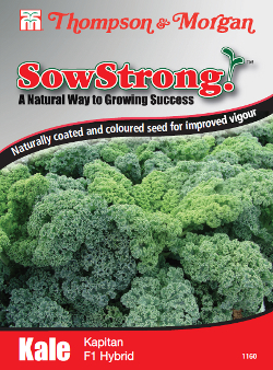 Image of Sow Strong Kapitan F1 Hybrid Kale Seeds