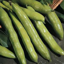 Image of Thompson and Morgan Bean : Broad Bean : Aquadulce Claudia Seeds