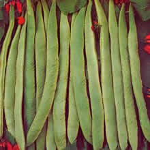 Image of Thompson and Morgan Bean : Runner Bean : Scarlet Emperor Seeds
