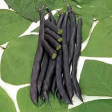 Image of Thompson and Morgan Bean : Climbing Bean : Blauhilde Seeds