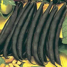 Image of Thompson and Morgan Bean : Dwarf French Bean : Purple Teepee Seeds