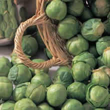 Image of Thompson and Morgan Brussels Sprout : Bedford Fillbasket Seeds