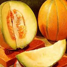 Image of Thompson and Morgan Melon : Ogen Seeds
