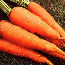 Image of Thompson and Morgan Carrot : Autumn King 2 Seeds