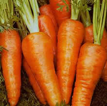 Image of Thompson and Morgan Carrot : Supreme Chantenay Red Cored Seeds