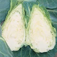 Image of Thompson and Morgan Cabbage : Caramba F1 (Sweetheart Type) Seeds