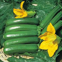 Image of Thompson and Morgan Courgette : Defender F1 Hybrid Seeds