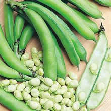 Image of Thompson and Morgan Bean : Broad Bean : Medes Seeds