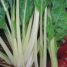 Image of Thompson and Morgan Swiss Chard Swiss Seakale Beet Lucullus Seeds