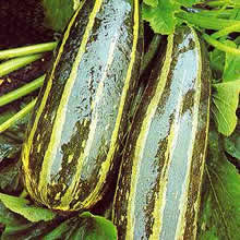 Image of Thompson and Morgan Marrow : Long Green Striped Seeds