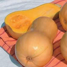 Image of Thompson and Morgan Squash : Winter : Harrier F1 Hybrid Seeds