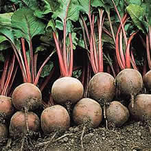 Image of Thompson and Morgan Beetroot : Globe : Red Ace F1 Hybrid Seeds