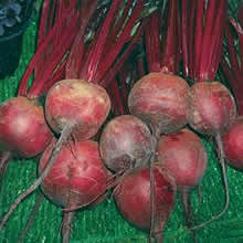 Image of Thompson and Morgan Beetroot : Solo F1 Hybrid Seeds