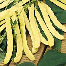 Image of Thompson and Morgan Bean : Climbing Bean : Goldfield Seeds