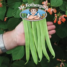 Image of Mr Fothergills Celebration Runner Bean Seeds