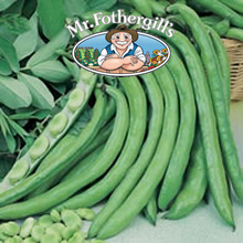 Image of Mr Fothergills Greeny Broad Bean Seeds