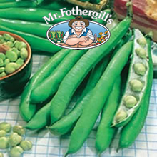 Image of Mr Fothergills Perla Broad Bean Seeds