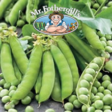 Image of Mr Fothergills Twinkle Pea Seeds