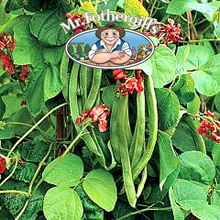 Image of Mr Fothergills Wisley Magic Runner Bean Seeds