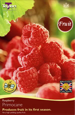 Small Image of Raspberry Primocane - Two Roots