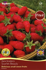 Small Image of Strawberry Crown - Scarlet Beauty