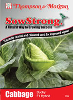 Sow Strong Duchy F1 Hybrid Cabbage Seeds