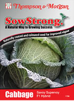 Sow Strong Savoy Supervoy F1 Hybrid Cabbage Seeds
