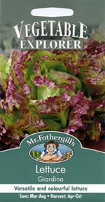 Vegetable Explorer Giardina Lettuce Seeds