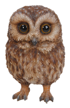 Image of Pet Pals Baby Tawny Owl - Resin Garden Ornament