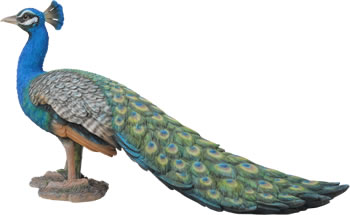 Image of Real Life Peacock - Resin Garden Ornament