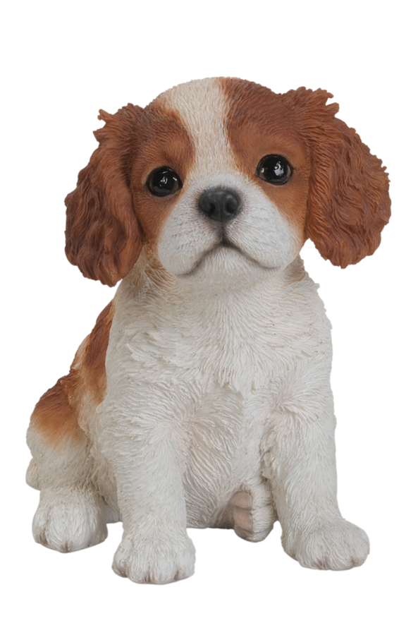 Pet Pals King Charles Puppy Resin Garden Ornament 1639  : l King Charles Spaniel Pet Pal from www.garden4less.co.uk size 593 x 900 png 1220kB