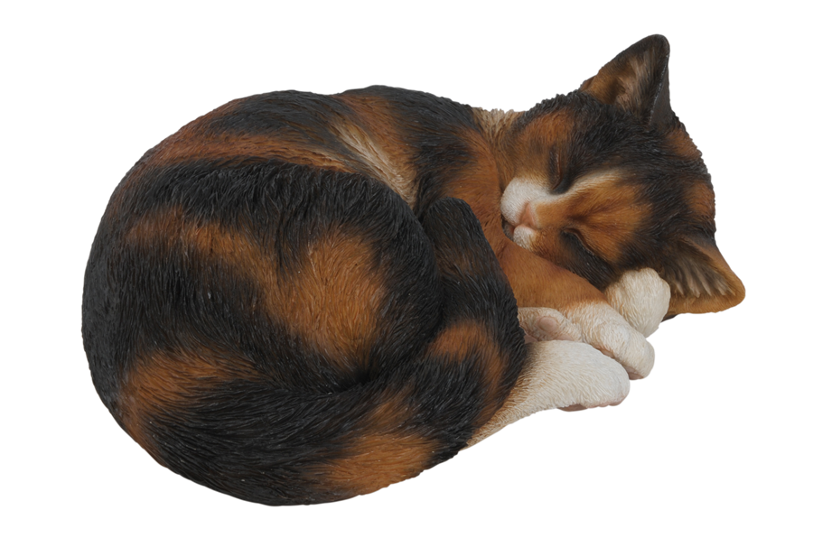 vivid sleeping tortoiseshell cat