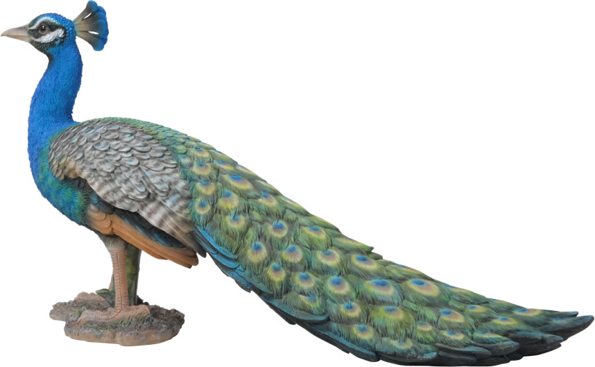 Attirant Small Image Of Real Life Peacock   Resin Garden Ornament