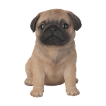 Pet Pal Pug Puppy - Resin Garden Ornament