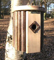 Image of Hazel Bird Nest Box
