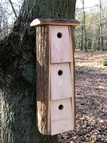 Oak Communual Bird Nest Box 163 28 99 Garden4less Uk Shop