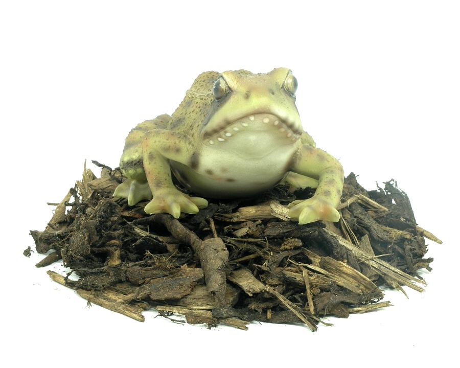 Frog Resin Garden Ornament 163 7 99 Garden4less Uk Shop