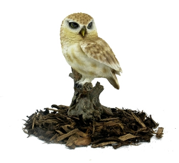 Little Owl - Resin Garden Ornament - Spin Image