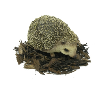 Pet Pals Pygmy Hedgehog - Resin Garden Ornament - Spin Image