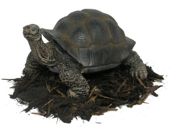 Image of 30cm Giant Tortoise - Resin Garden Ornament